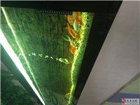 壁挂式鱼缸