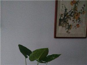 锦炼新村1室 1厅 1卫500元/月
