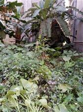 建业花园地皮