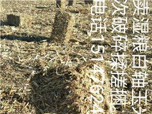 出售玉米秸捆,高粱秸捆,谷草捆