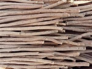 甘肅岷縣農家自產自銷純無硫道地中藥材