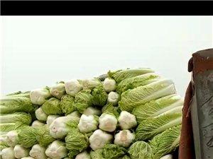 白菜便宜賣了