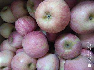 自家山上苹果