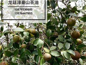 龙廷淳豪山茶油