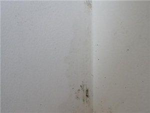 专业堵漏,各种房屋漏水,各种高空作业