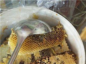 出售真蜂糖