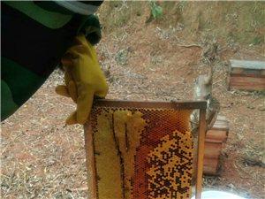 来自广西大山的野生蜂蜜