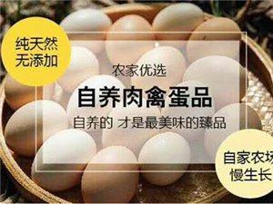 销售南京散养鸡、鸭及鸡蛋