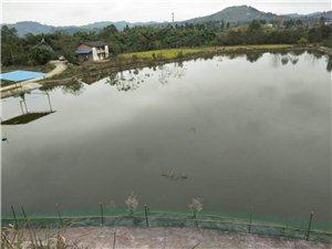 魚塘及農村房屋出租