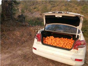 有脐橙鲜果出售,可到县城看果,适合电商。