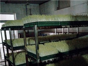 有機芽苗蔬菜廠低價轉讓