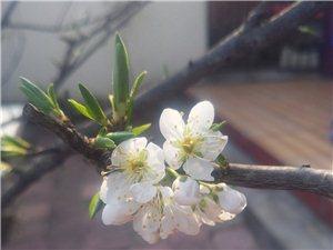青白江龙门桃花沟风景区