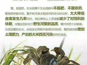 蟹稻米產地直銷