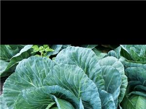 蔬菜配送服務