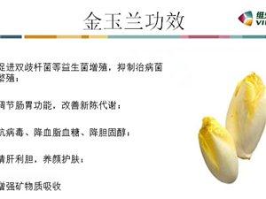健康首選維樂夫金玉蘭,玉蘭菜