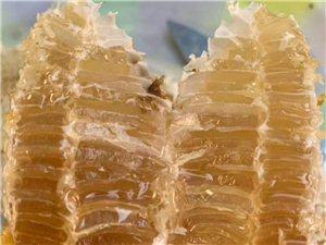 纯野生蜂蜜