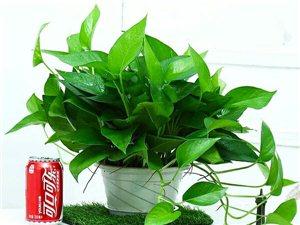 绿苑家居园艺植物