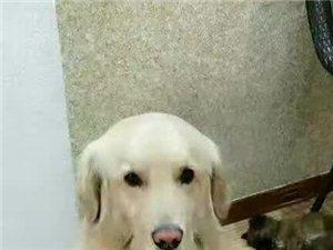爱犬走丢!见到联系我!重谢
