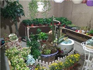 淘肉肉花圃,绿植,盆栽