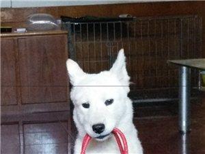 初級訓犬師