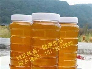 土蜂蜜出售