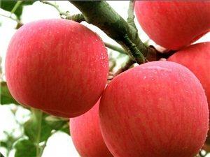 紅富士蘋果、酥梨