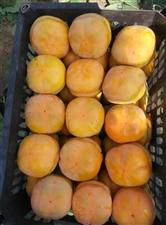 狼牙山富士苹果,磨盘山批发零售。