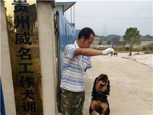 贵州威名工作犬训?#20998;?#24515;