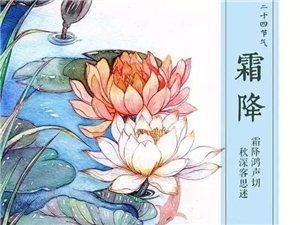 G20峰會招待外國貴賓的婺源皇菊