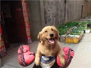 寻狗狗启示