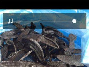 镇雄蚂蝗收购联系方式电话(微信)13116273613活体7块,干活30。