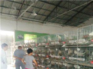鄭州特種養殖基地