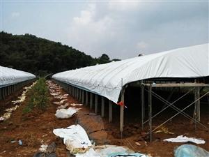 专业搭建养殖大蚌棚,包工包料包运费13855220116