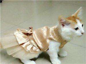 時尚能自理的貓咪,尋找新主人