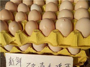 正宗土鸡蛋—撕壳