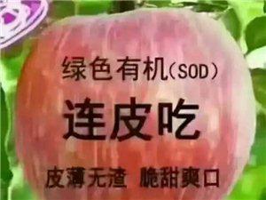 自家栽种的精品红富士!酥梨!全国包邮!详情请联系微信qmj6231电话:1829288620