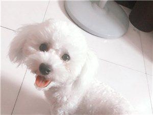 寻狗狗启示麻烦看下谢谢
