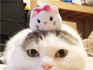 寵物貓一只