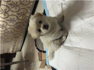 可愛的萌寵小奶狗求助好心人收養??