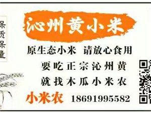 木瓜沁州黃小米