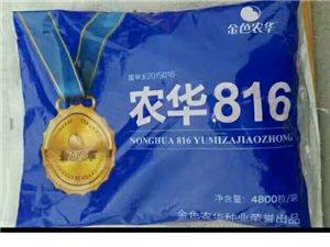 农华 816   玉米种