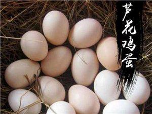 散养土鸡土鸡蛋