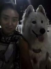 求助求助求助!我的爱犬萨摩耶一岁的,于十一月十五日下午四点左右在无极县齐洽村丢失,希望能得到大家的帮