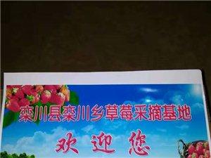 栾川堂上草莓园欢迎您