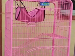 出售宠物猫及猫笼