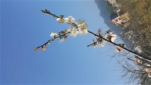 又是一年赏花季