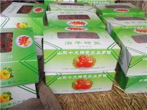 优质水果西红柿