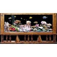 便宜處理高檔魚缸