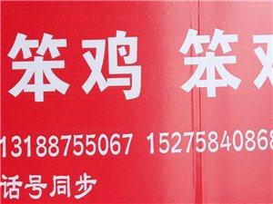 出售大红公鸡