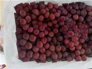 新疆葡萄年末大批发